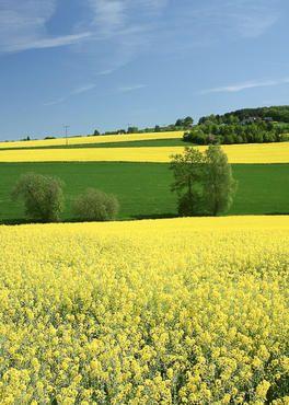Landschaftsfotografie und Naturaufnahmen in Oranienburg
